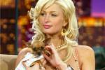 Chihuahua van Paris Hilton overleden